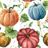 Watercolor pumpkin pattern. Hand painted pumpkin ornament with flower, leaves and branch isolated on white background. Botanical illustration for design and royalty free illustration
