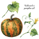 Watercolor pumpkin set. Hand painted pumpkin with flower, leaves and branch isolated on white background. Botanical. Illustration for design. Halloween print vector illustration