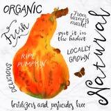 Watercolor pumpkin Stock Photos