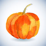 Watercolor pumpkin on white background. Royalty Free Stock Images
