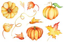 Watercolor pumpkins, illustration isolated on the white background Stock Photography