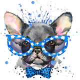 Watercolor puppy dog illustration. French Bulldog breed.