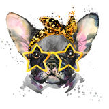 Watercolor puppy dog illustration. French Bulldog breed. Royalty Free Stock Photography