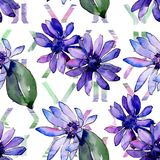 Watercolor purple african daisy. Floral botanical flower. Seamless background pattern. Fabric wallpaper print texture. Aquarelle wildflower for background stock illustration