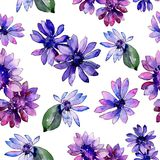 Watercolor purple african daisy. Floral botanical flower. Seamless background pattern. Fabric wallpaper print texture. Aquarelle wildflower for background vector illustration