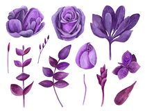 Watercolor purple flowers vector clip art. Lilac floral clipart. Botanical collection Stock Illustration