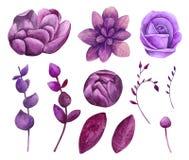 Watercolor purple flowers vector clipart. Violet floral clip art. Botanical collection Vector Illustration
