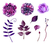 Watercolor purple flowers vector. Floral clip art Royalty Free Stock Image