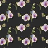 Watercolor purple orchids seamless pattern. Hand painted on a dark background Royalty Free Stock Image