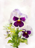 Watercolor purple pansy (Viola tricolor) Stock Photos