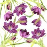 Watercolor purple tulips Stock Image
