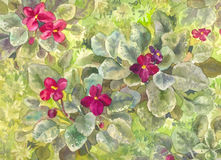 Watercolor purple violets. Burgundy flowers on the bed. View Stock Photography