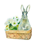 Watercolor rabbit in basket. Stock Photography