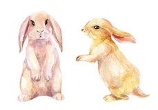 Watercolor rabbit illustration Stock Images