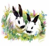 Watercolor rabbits in green grass vector illustration Stock Photos