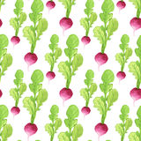 Watercolor radish seamless pattern. Organic product vector hand paint background. Stock Image