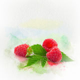 Watercolor raspberries collage. Stock Images
