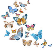 Watercolor raster butterflies Royalty Free Stock Image