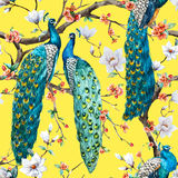 Watercolor raster peacock pattern. Beautiful raster pattern Watercolor raster peacock pattern Royalty Free Stock Photos