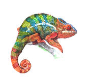 Watercolor realistic chameleon animal Stock Images