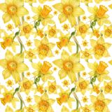 Watercolor realistic floral pattern with narcissus royalty free stock photos