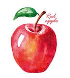 Watercolor red apple. Royalty Free Stock Images