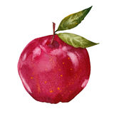 Watercolor red apple Stock Photo