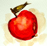 Watercolor red apple. Royalty Free Stock Image