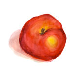 A watercolor red apple  Stock Images