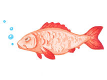 Watercolor red aquarium fish Royalty Free Stock Photos