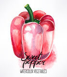 Watercolor red bell pepper Royalty Free Stock Images