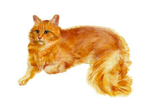 Watercolor red cat. Watercolor painting. Red cat on a white background Stock Photo