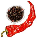 Set of peppers - watercolor on white. Watercolor red chili pepper and black pepper - on white background vector illustration