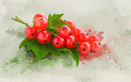 Watercolor red currant. Royalty Free Stock Images