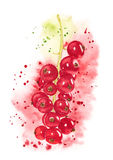 Watercolor red currant Stock Photo