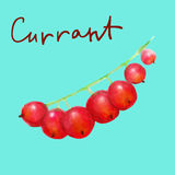 Watercolor red currant  on transparent background Stock Photo