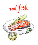 Watercolor red fish. Watercolor hand drawn red fish - vector Illustration Royalty Free Stock Images