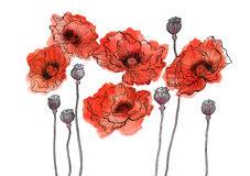 Watercolor red flower poppies big group illustration Royalty Free Stock Photography