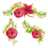 Watercolor red flowers with fern leaves Stock Photos
