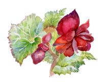 Watercolor red flowers illustration. Stock Photo