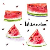 Watercolor red juicy watermelon set. stock illustration
