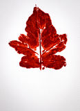 Watercolor of red leaf Royalty Free Stock Images