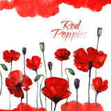 Watercolor red poppies Stock Images