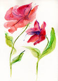 Watercolor red poppies. Watercolor background, Spectacular lilac-raspberry with colorful flowing Stock Photography