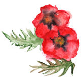 Watercolor red poppies floral composition isolated vector Stock Image