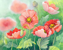 Watercolor of red poppies on green flowerbed. Watercolor of red poppies on green sunny flowerbed Royalty Free Stock Photo
