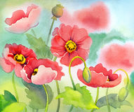 Watercolor of red poppies on sunny flowerbed. Watercolor of red poppies on green sunny flowerbed Stock Photo