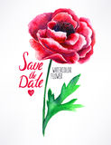 Watercolor red poppy Stock Image