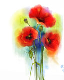 Watercolor red poppy flower painting Royalty Free Stock Photo
