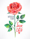 Watercolor red rose. Beautiful red rose watercolor. hand-drawn illustration Royalty Free Stock Photography